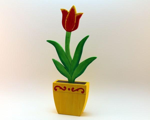 Tulpe in versch. Farben